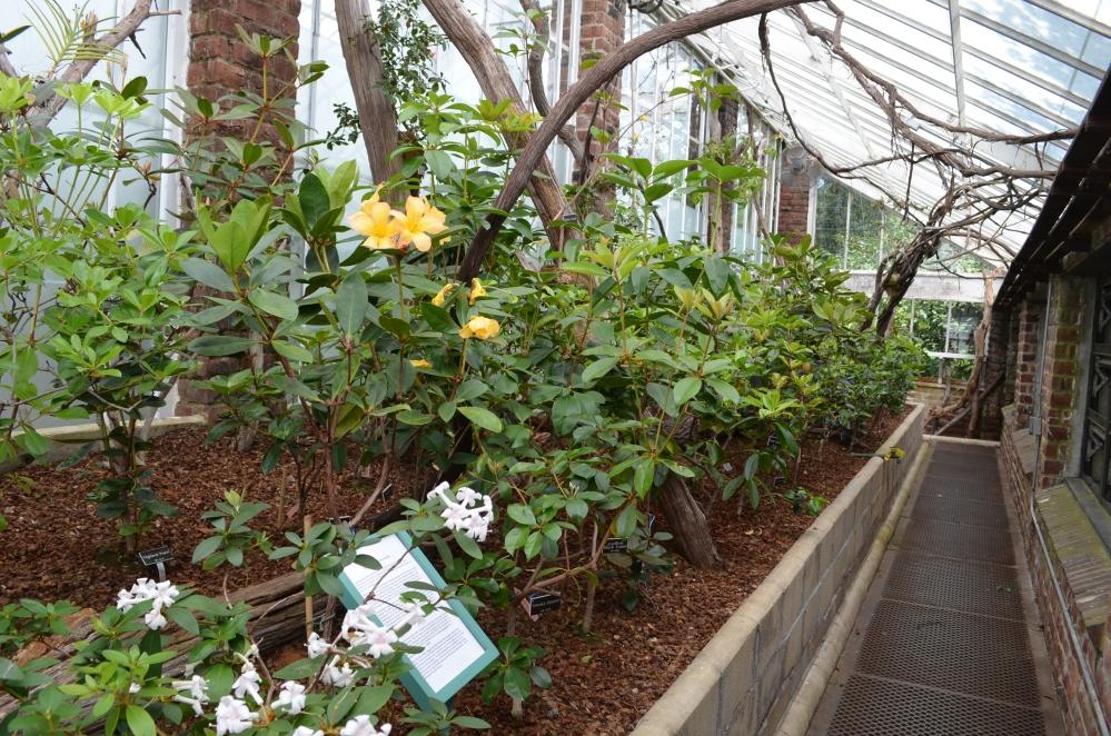 Planting Fields Arboretum pictures (6/6)